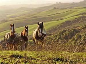 Paardrijden en Toscane